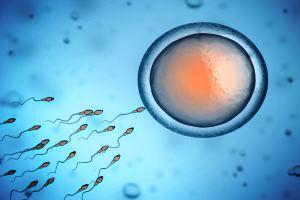 icsi versus IVF